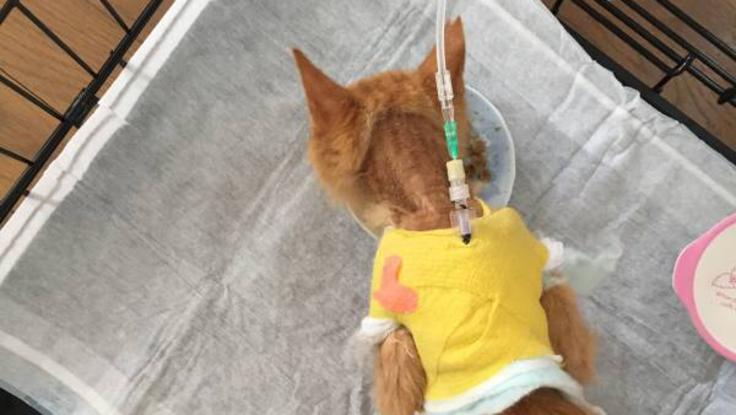 【奇跡の猫】慢性腎不全と闘うちゃちゃまるに生きる光を