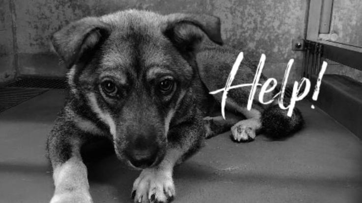 殺処分から救いたい!犬・猫の保護シェルター建設プロジェクト