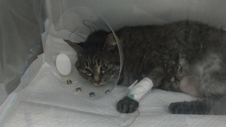 飼い猫いろは治療費
