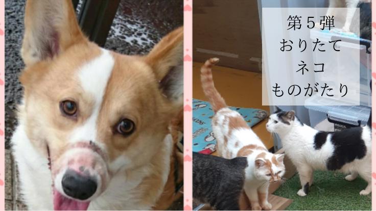 おりたて第5弾|スイッチ犬の訓練費と保護猫の健康診断費用にご支援を