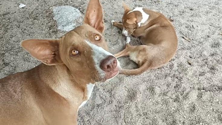 タオ島に暮らす野良犬たちを救いたい!