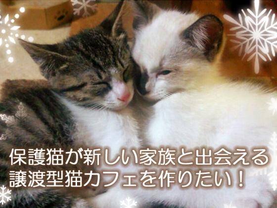 保護猫が新しい家族と出会える譲渡型ネコカフェを作りたい!!