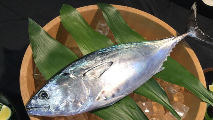 旨いはもちろんモチモチなのにとろける食感、養殖魚の新星スマ!!