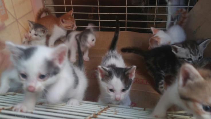 沖縄県で増える猫の多頭崩壊を未然に防ぎたい!!