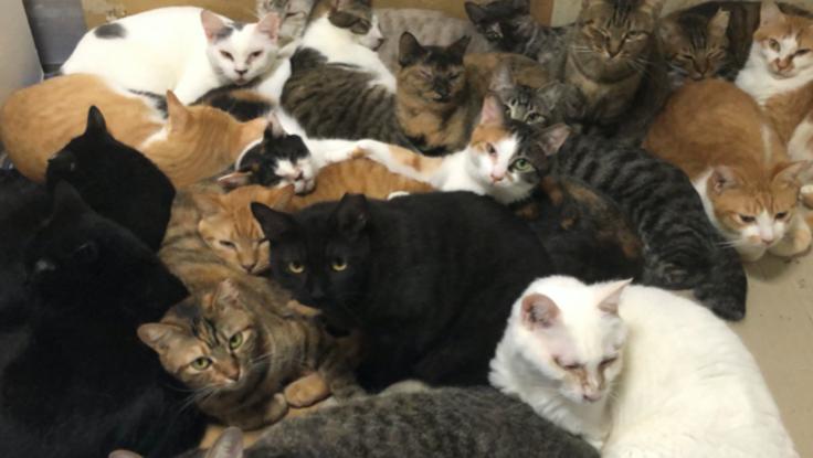 猫の保護、シェルターを作り殺処分をできるだけ減らしたいです。
