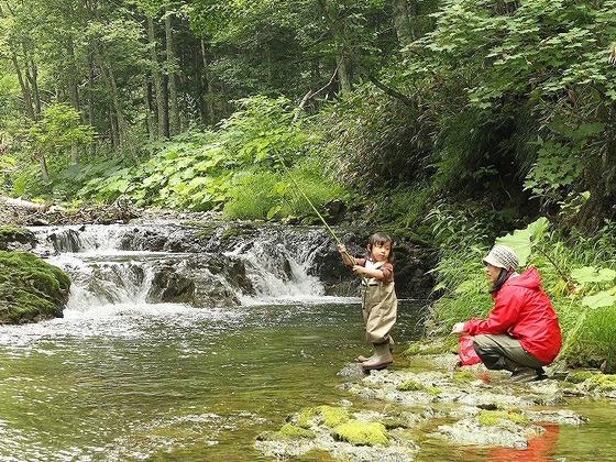 北海道知床半島つけ根の森にツリーハウスをつくりたい!