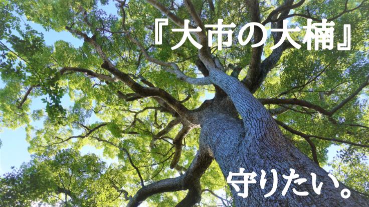 大市八幡神社:樹齢400年超の御神木を次の百年につなぐ