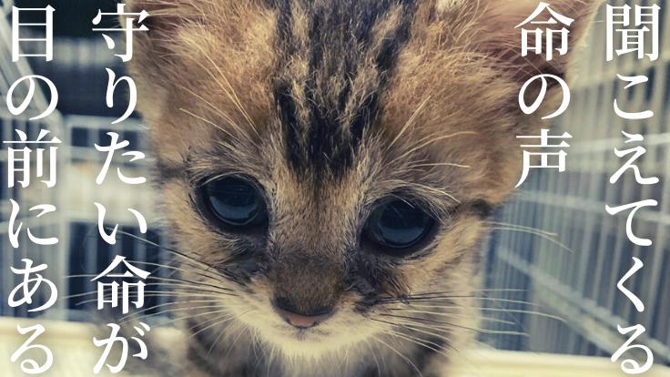 居場所を失う149匹多頭飼育崩壊現場の猫にシェルターを作りたい!