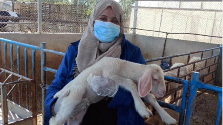 私の名前はタグリード 羊を守り、ガザの女性の暮らしを守りたい