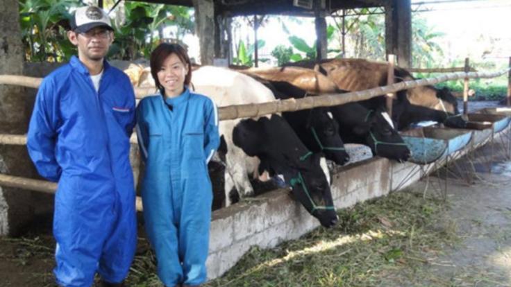 酪農不毛の地、フィリピンで酪農を続ける日本人夫婦を応援して下さい!