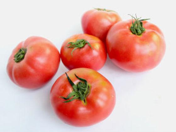 みんなが安心して食べられる、栄養満点の無農薬野菜を作りたい。