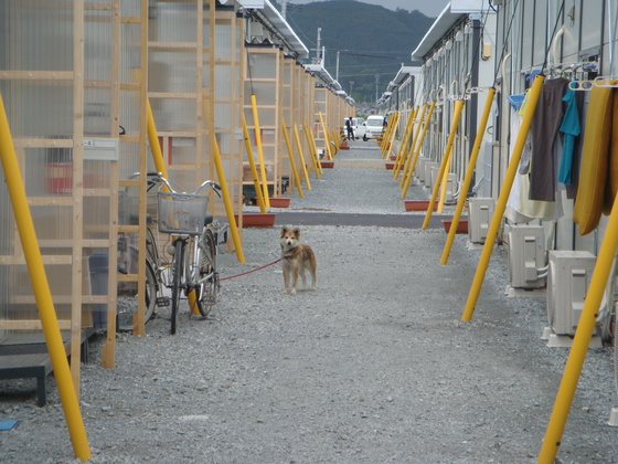 「気仙沼 Dog Place」被災地で頑張るペット達に交流の場を!