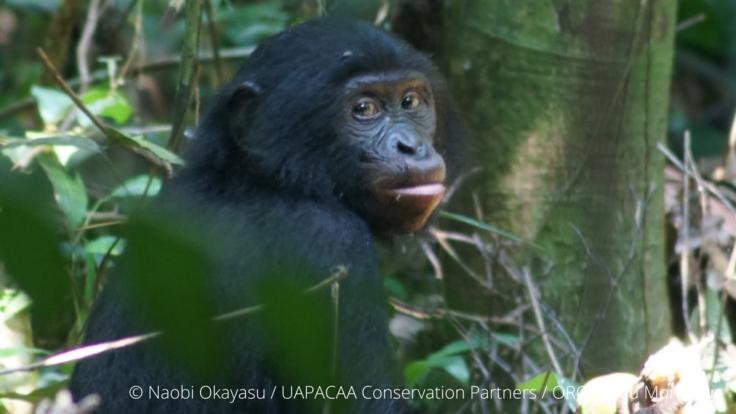 アフリカ奥地の感染症対策|生薬事典を作り人々と野生動物を守りたい。