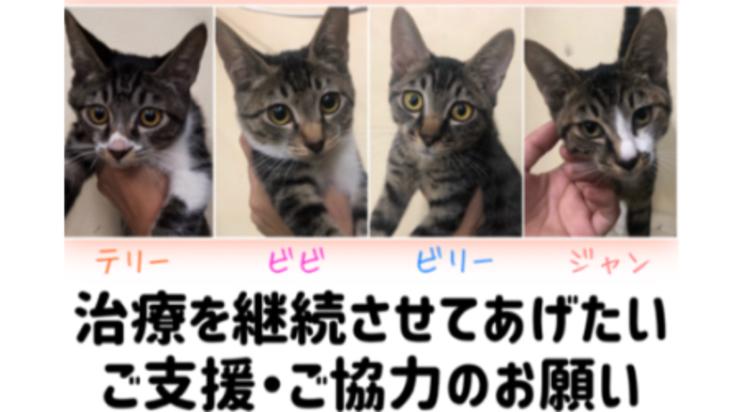 猫伝染性腹膜炎(FIP)+肺の化膿性炎症の2匹の命をつなぎたい。