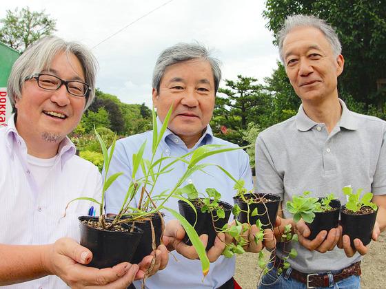 【第2弾始動】3.11で被災した宮城県の海浜植物を再生させたい!