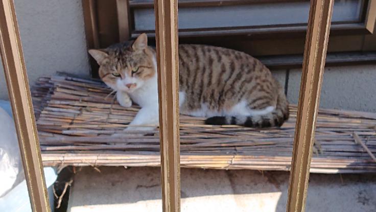 野良猫の保護と避妊&去勢手術