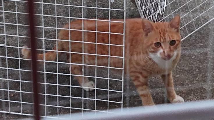 保護猫ワクチン、野良猫保護