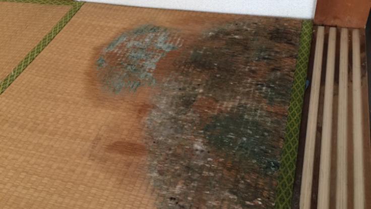 カビ部屋修繕プロジェクト 漏水被害総額5000万円以上