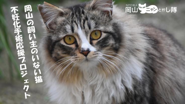 岡山の飼い主のいない猫不妊化手術プロジェクト