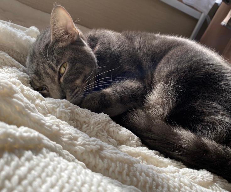 幼い命を救いたい〜FIP(猫伝染性腹膜炎)と診断された愛猫ココア〜