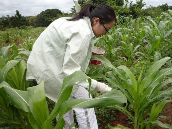 ガーナの日雇貧困農民へ安定して働ける場所「Food to all農園」を提供