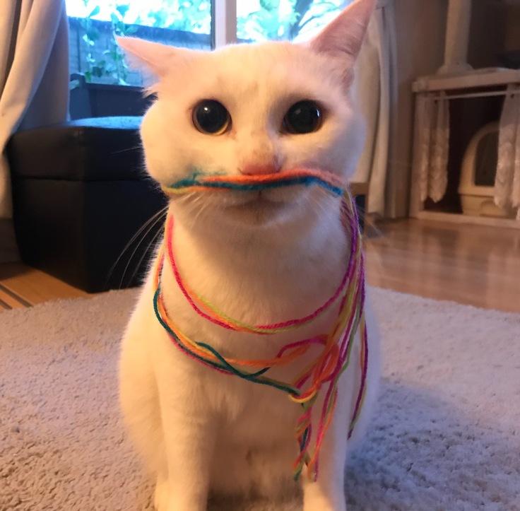 難病の猫を救いたい!!奇跡をおこしたい!時間がありません