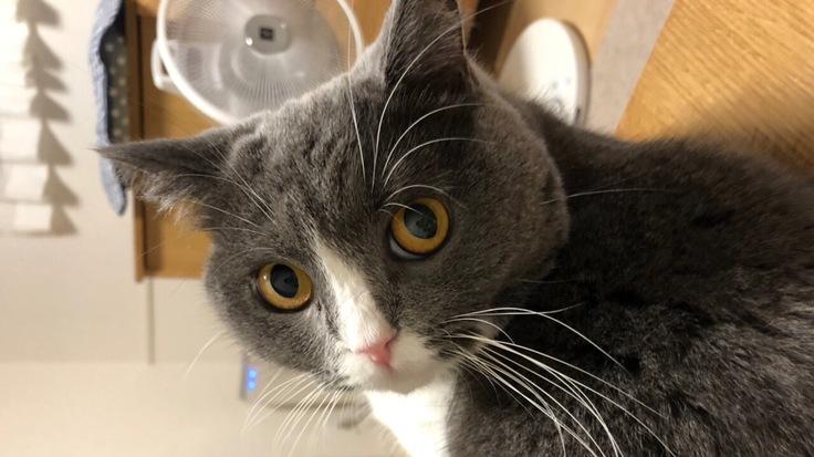1歳のリンパ腫の猫を助けて下さい