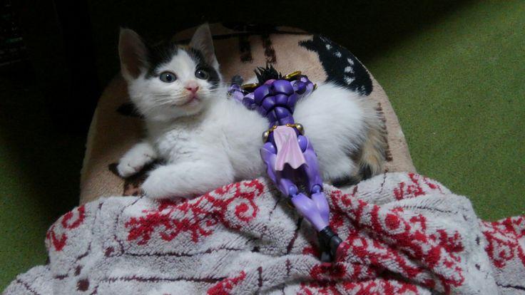 肥大型心筋症の保護猫ちゃんにご支援をお願いいたします