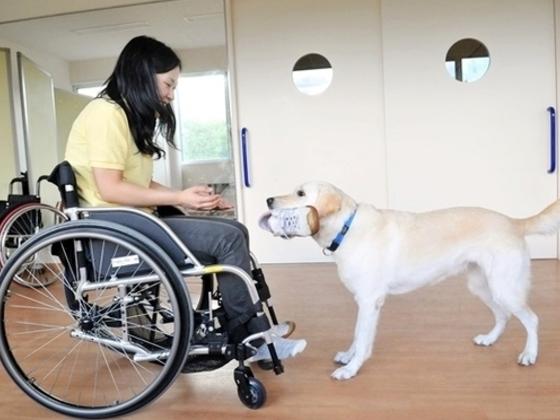 介助犬育成のためのDog Runを拡張するプロジェクト