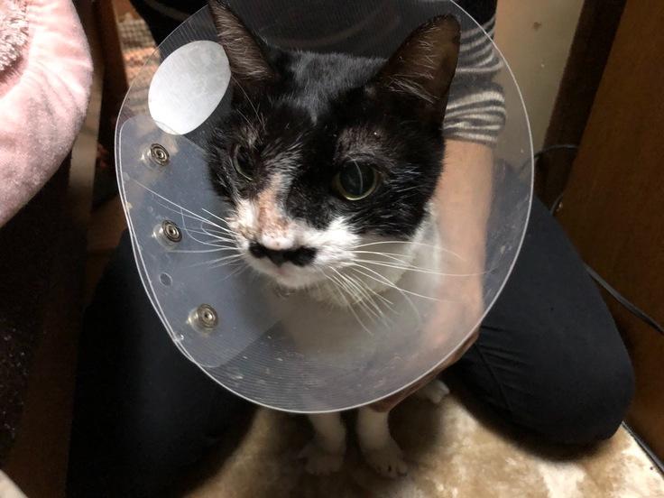 チップ(愛猫)を延命をさせたい(最新の治療法の臨床研究に挑戦)