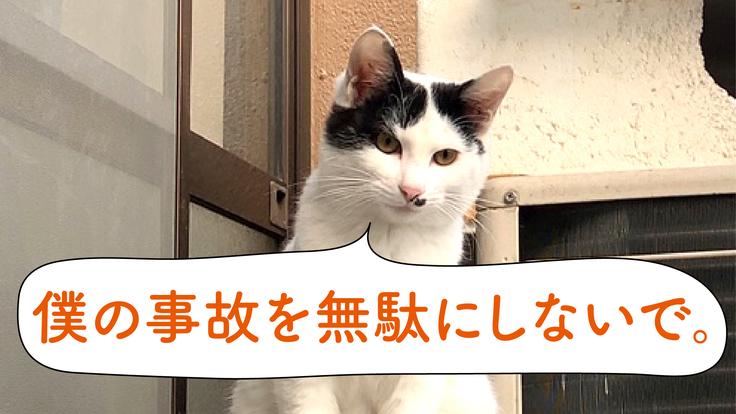 キャットウインク(猫のロードキルを防ぐ新しいサイン)の提案