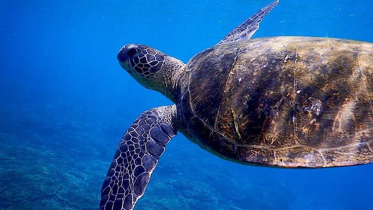 ダイバーによる海中ゴミ拾い!〜海の魅力をたくさんの人に伝えたい〜