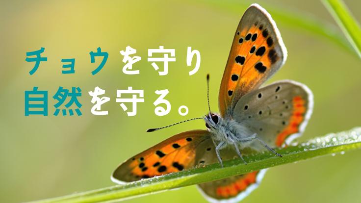 チョウは自然を守るバロメーター。絶滅の危機にあるチョウを守る