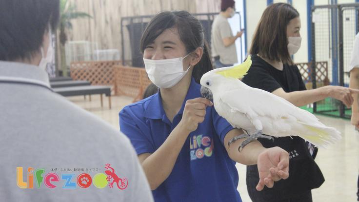 #動物とふれあう癒しの機会|屋内型動物園LIFE ZOO無料開放へ