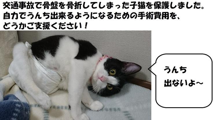 事故で骨折し排便障害をわずらった保護猫メルちゃんの手術費用を!