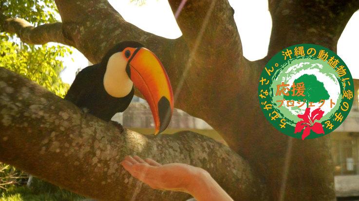 心から愛おしい沖縄の動植物に愛の手を|ネオパーク応援プロジェクト