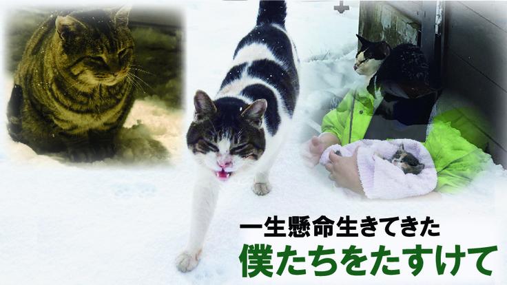 凍死する猫達を救いたい〜緊急対応設備を整えたシェルター設置の実現を