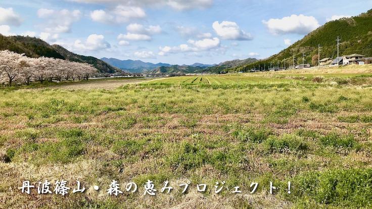 みんなで森の恵みを楽しもう!丹波篠山の新しい里山づくりプロジェクト