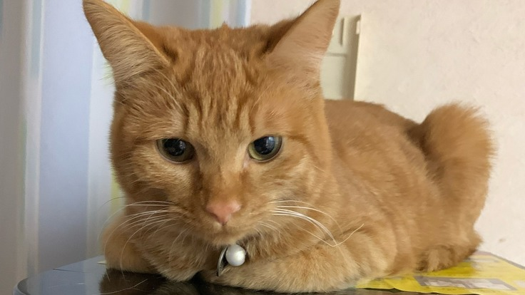 このままでは1歳まで生きれません!助けてください!心臓病の愛猫紬