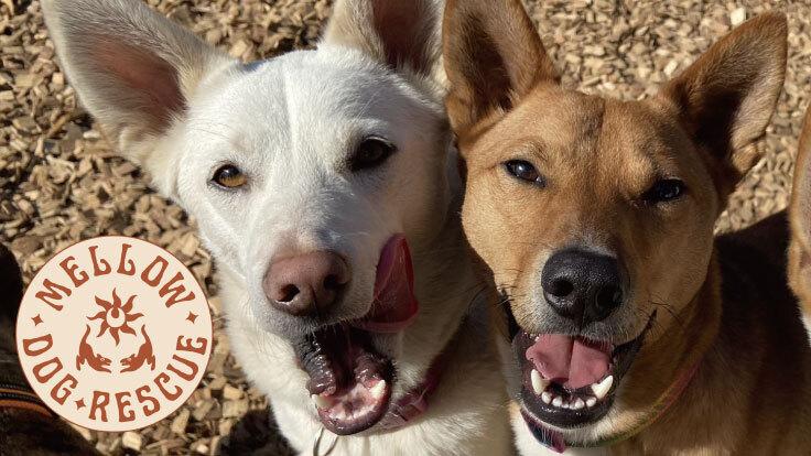 """命の期限をつけられた犬たちが再び""""活き""""られるシェルターを作りたい"""
