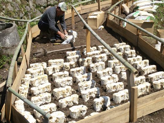 霊芝栽培木の殺菌のための常圧蒸し窯を購入したい!