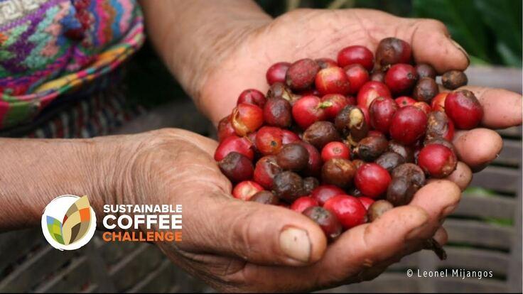【SDGs】貧困に苦しむコーヒー生産者の生活を支援したい!