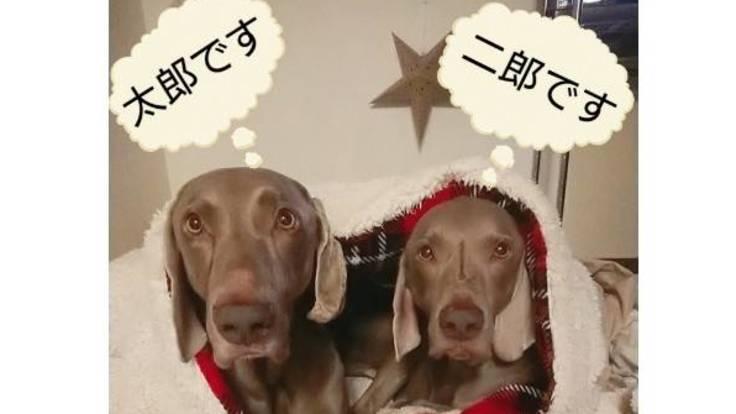 保護犬太郎二郎の保護費のお願い<(_ _)>