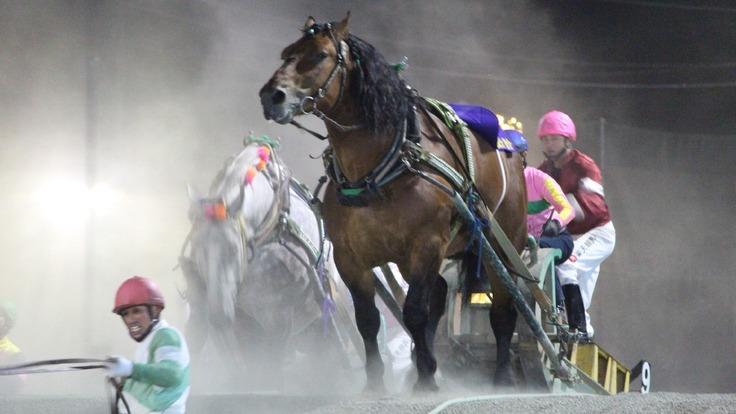 買い手がいない・引退を余儀なくされた馬を1頭でも多く救いたい!