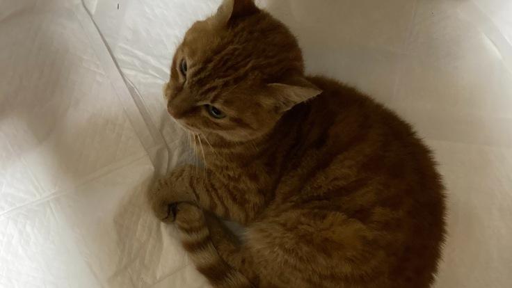 猫を保護しました。医療費のご支援、ご協力よろしくお願いします。