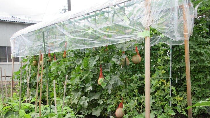 野菜、果物の雨よけ用、トンネル支柱(1本足)を使用して頂きたい。