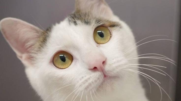 余命2か月・・・心臓病の保護猫「ふたば」を救いたい。