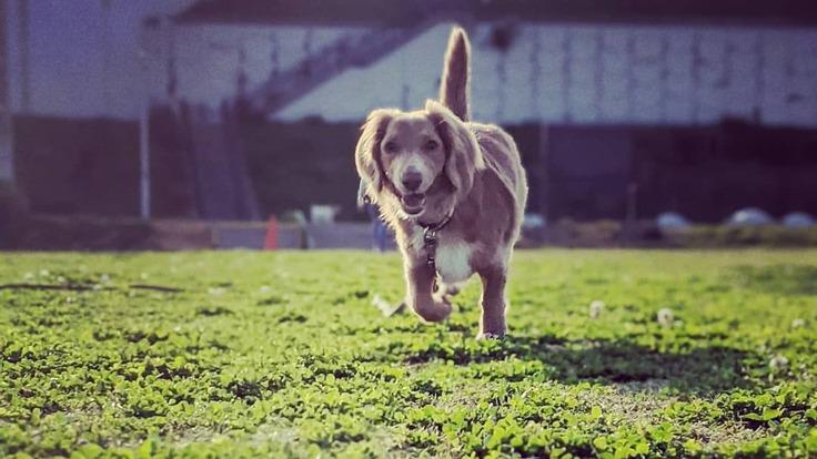 保護犬の一時預かりもするショップを作りたい