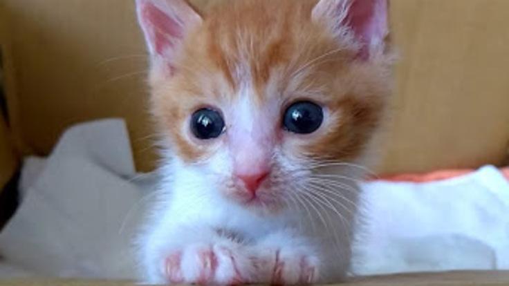 難病と闘う生後7ヶ月の保護猫「茶々丸」を助けてください!