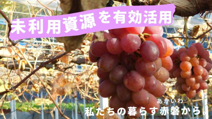 赤磐産果物が変身!未利用資源を除菌ウエットティッシュの原材料に